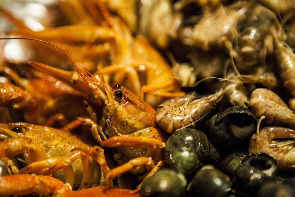 crustacés-et-fruits-de-mer